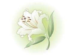 百合の花粉